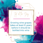 Growing wine grapes takes at least 6 years before it should be bottled into wine
